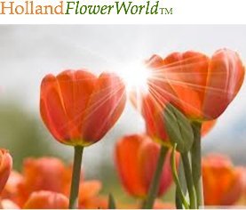 HollandFlowerWorld